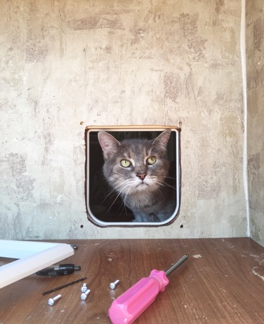 how to install a pet door in your RV
